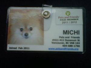 Michi`s Therapy Dog badge.