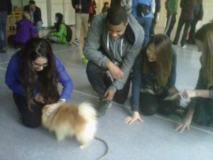 Pets and attention from happy students